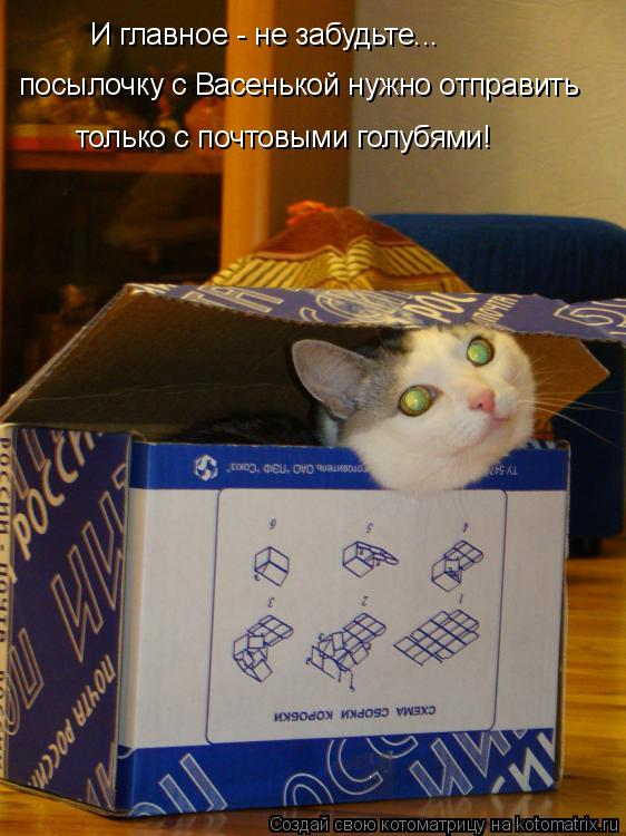 Котоматрица: И главное - не забудьте...  посылочку с Васенькой нужно отправить только с почтовыми голубями!