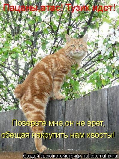 Котоматрица: обещая накрутить нам хвосты! Поверьте мне,он не врет, Пацаны,атас! Тузик идет!