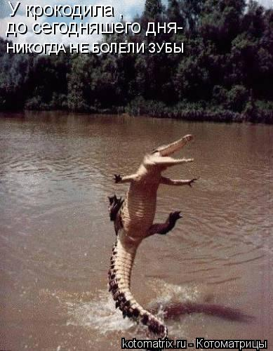 Котоматрица: У крокодила , до сегодняшего дня- НИКОГДА НЕ БОЛЕЛИ ЗУБЫ