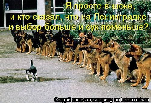 Котоматрица: Я просто в шоке,  и кто сказал, что на Ленинградке и выбор больше и сук поменьше?