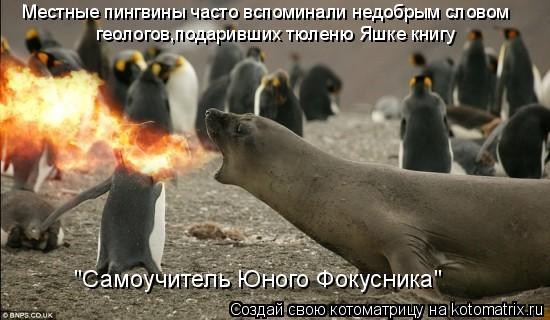 """Котоматрица: Местные пингвины часто вспоминали недобрым словом геологов,подаривших тюленю Яшке книгу  """"Самоучитель Юного Фокусника"""""""