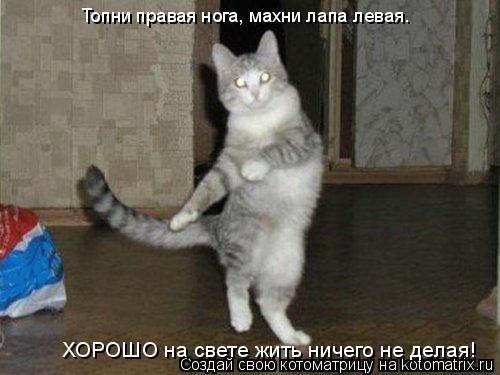 Котоматрица: Топни правая нога, махни лапа левая. ХОРОШО на свете жить ничего не делая!