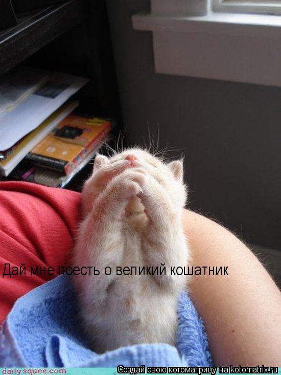 Котоматрица: Дай мне поесть о великий кошатник