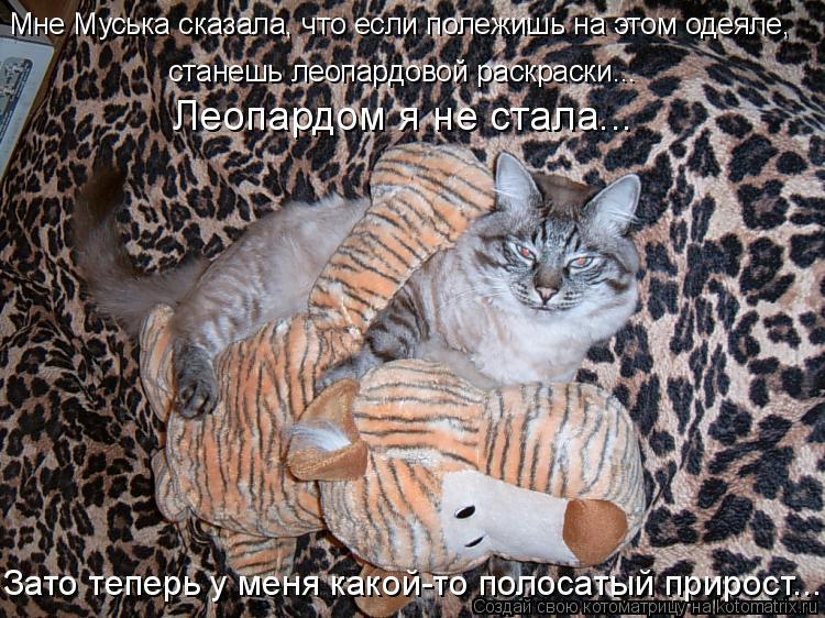 Котоматрица: Мне Муська сказала, что если полежишь на этом одеяле, станешь леопардовой раскраски... Леопардом я не стала... Зато теперь у меня какой-то пол