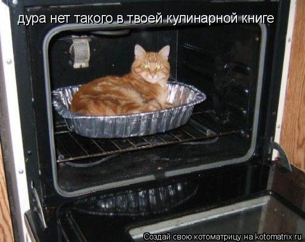 Котоматрица: дура нет такого в твоей кулинарной книге