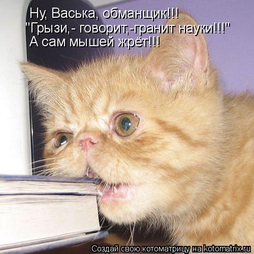 """Котоматрица: Ну, Васька, обманщик!!! """"Грызи,- говорит,-гранит науки!!!"""" А сам мышей жрёт!!!"""