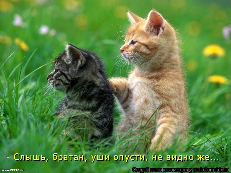 Котоматрица: - Слышь, братан, уши опусти, не видно же...