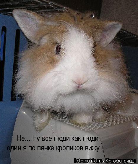 Котоматрица: Не... Ну все люди как люди один я по пянке кроликов вижу