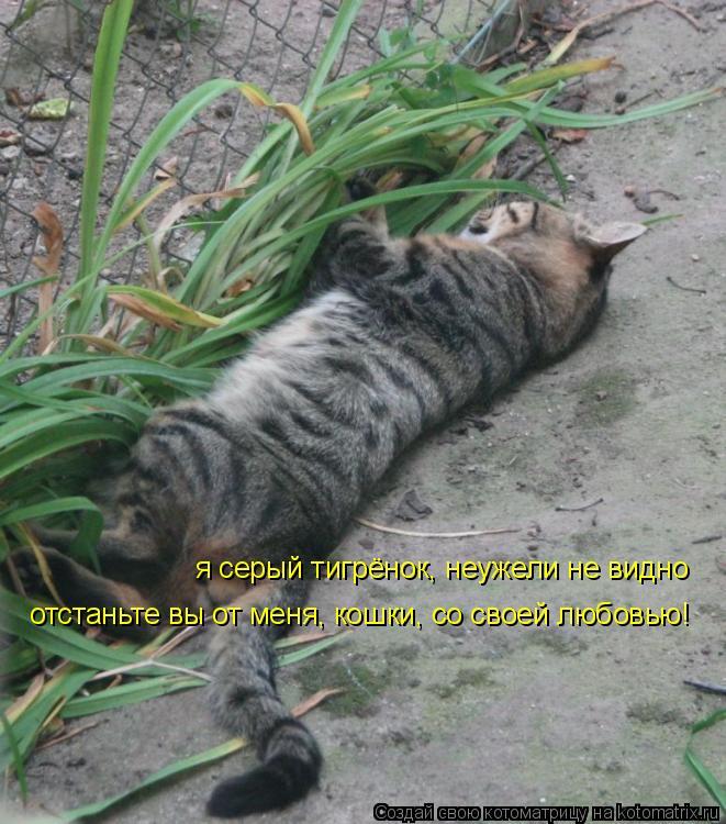 Котоматрица: я серый тигрёнок, неужели не видно отстаньте вы от меня, кошки, со своей любовью!