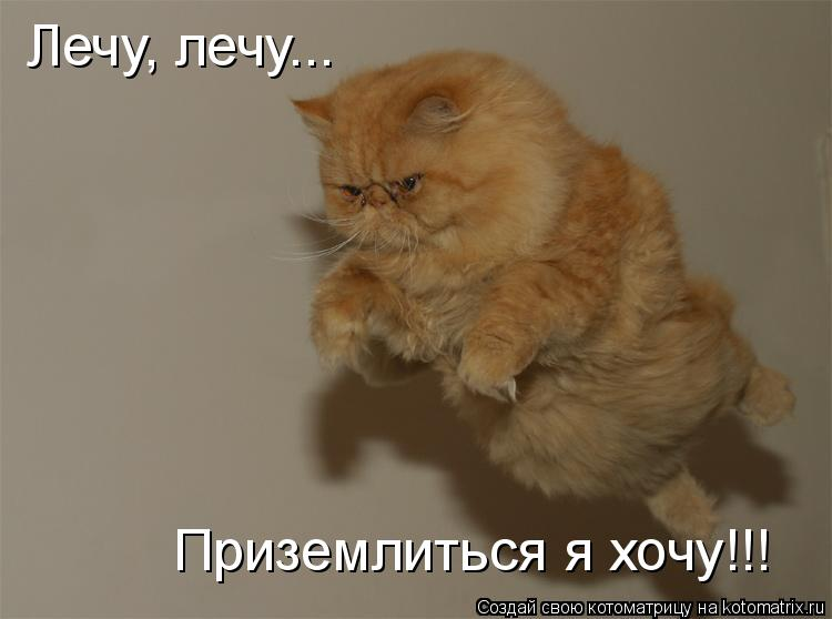 Котоматрица: Лечу, лечу... Приземлиться я хочу!!!