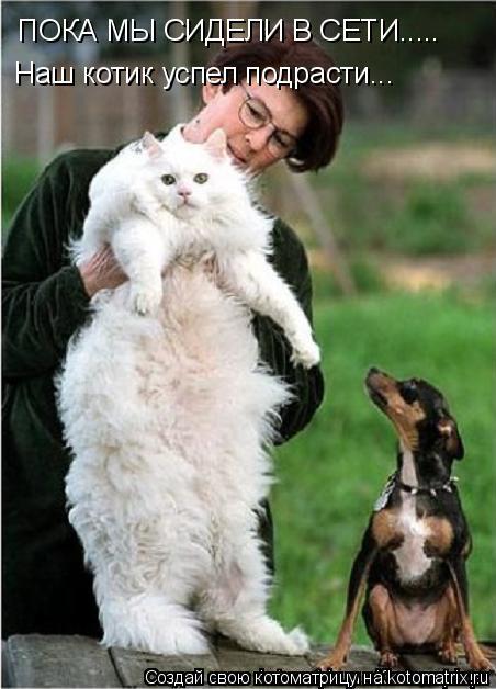 Котоматрица: ПОКА МЫ СИДЕЛИ В СЕТИ..... Наш котик успел подрасти...
