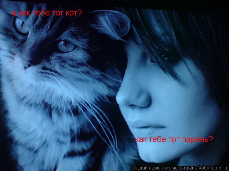 Котоматрица: как тебе тот парень? а как тебе тот кот?