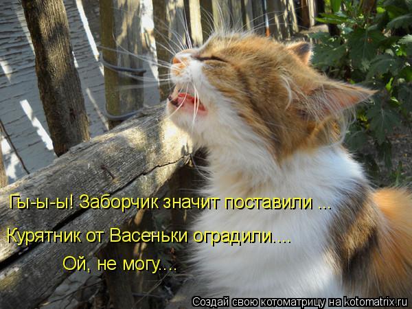 Котоматрица: Гы-ы-ы! Заборчик значит поставили ... Курятник от Васеньки оградили.... Ой, не могу....