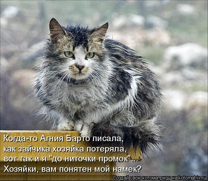 "Котоматрица: Когда-то Агния Барто писала, вот так и я ""до ниточки промок""... как зайчика хозяйка потеряла, Хозяйки, вам понятен мой намек?"