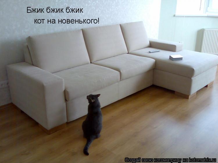 Котоматрица: кот на новенького! Бжик бжик бжик