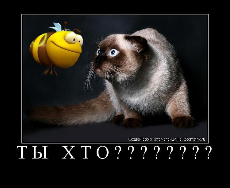 Котоматрица: ТЫ ХТО????????