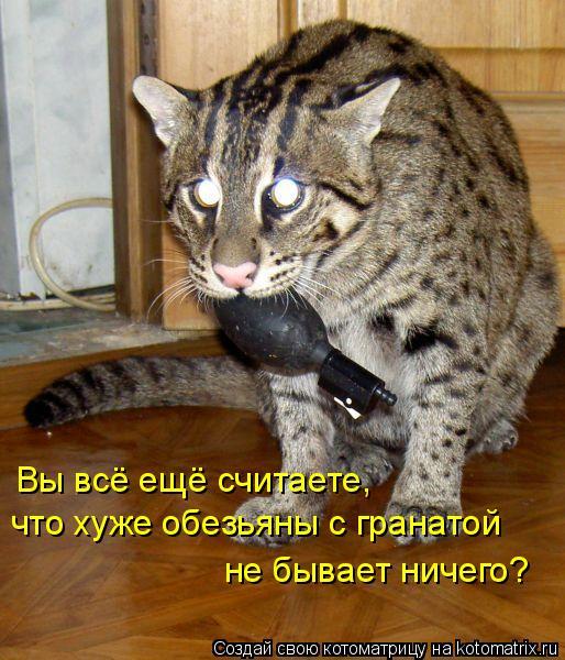 Котоматриця!)))) - Страница 2 740719