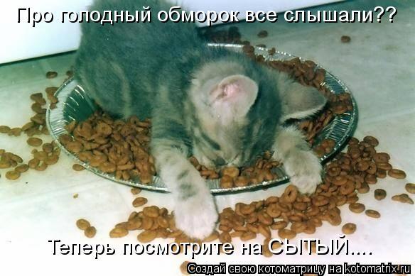 Котоматрица: Про голодный обморок все слышали?? Теперь посмотрите на СЫТЫЙ....