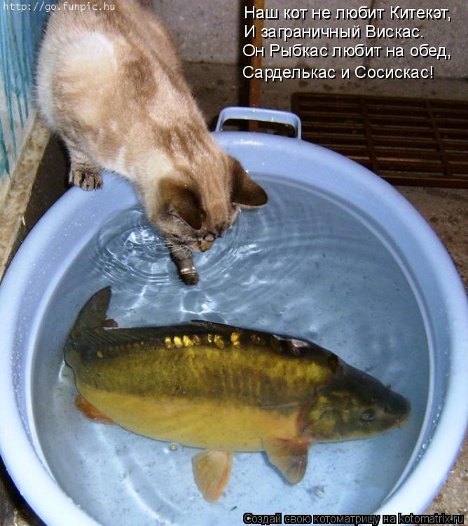Котоматрица: Наш кот не любит Китекэт, Наш кот не любит Китекэт, И заграничный Вискас. Он Рыбкас любит на обед, Сарделькас и Сосискас!
