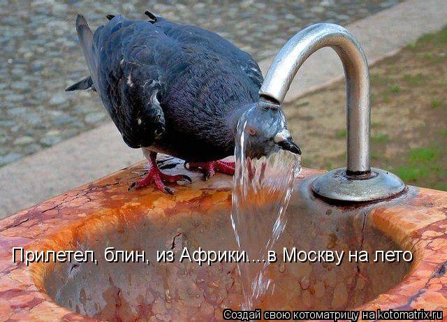 Котоматрица: Прилетел, блин, из Африки....в Москву на лето