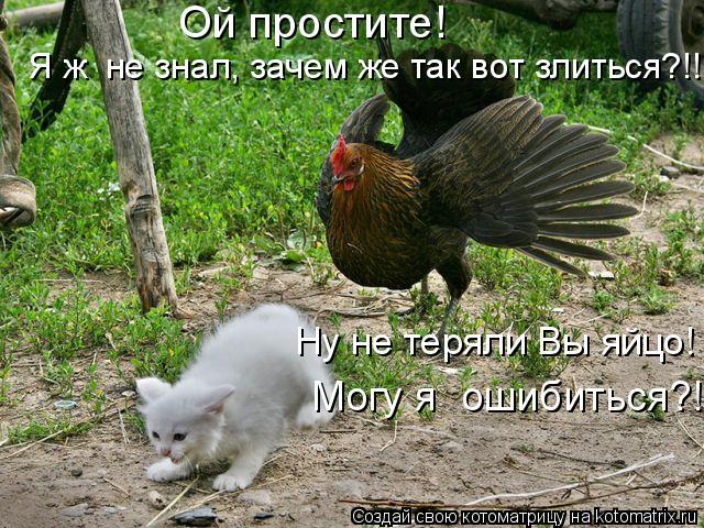Котоматрица: Ой простите!  Я ж  не знал, зачем же так вот злиться?!! Могу я  ошибиться?! Ну не теряли Вы яйцо!