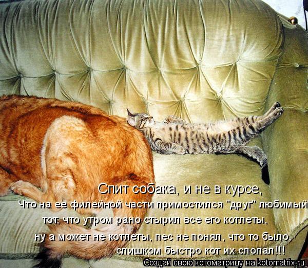 """Котоматрица: Спит собака, и не в курсе, Что на ее филейной части примостился """"друг"""" любимый, тот, что утром рано стырил все его котлеты, ну а может не котлет"""