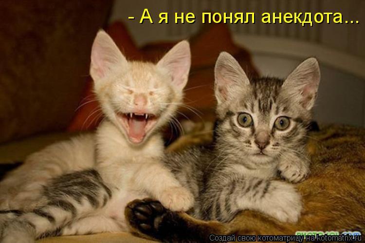 Котоматрица: - А я не понял анекдота...