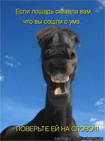 Котоматрица: Если лошадь сказала вам, что вы сошли с ума, ПОВЕРЬТЕ ЕЙ НА СЛОВО!!!