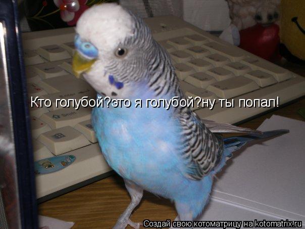 Котоматрица: Кто голубой?это я голубой?ну ты попал!