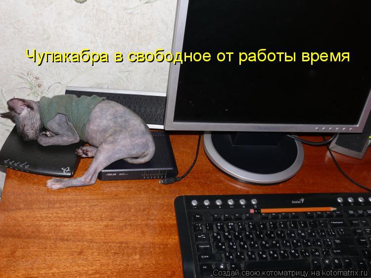 Котоматрица: Чупакабра в свободное от работы время