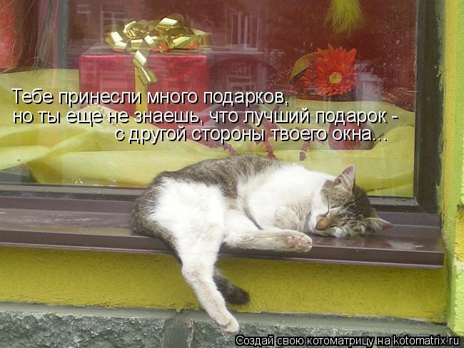 Котоматрица: Тебе принесли много подарков, но ты еще не знаешь, что лучший подарок - с другой стороны твоего окна...