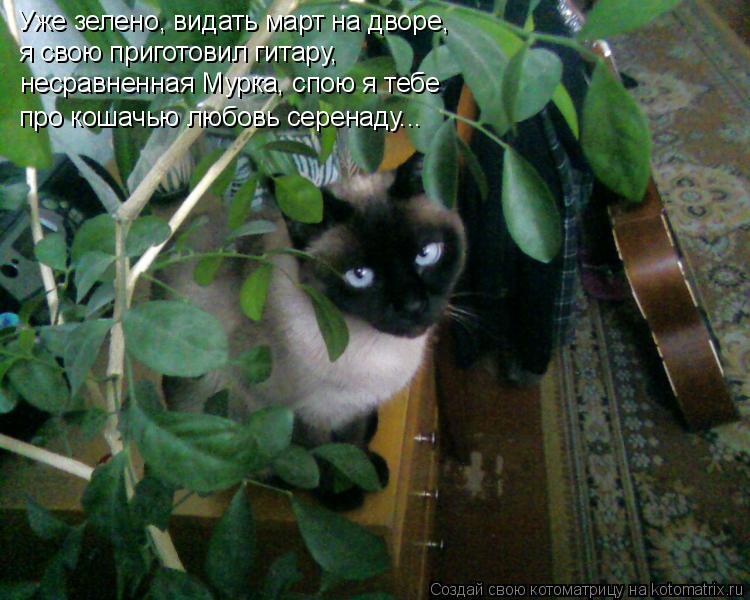 Котоматрица: Уже зелено, видать март на дворе, я свою приготовил гитару, несравненная Мурка, спою я тебе про кошачью любовь серенаду...