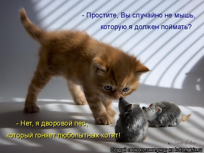 Котоматрица: - Простите, Вы случайно не мышь,  которую я должен поймать? - Нет, я дворовой пес, который гоняет любопытных котят!