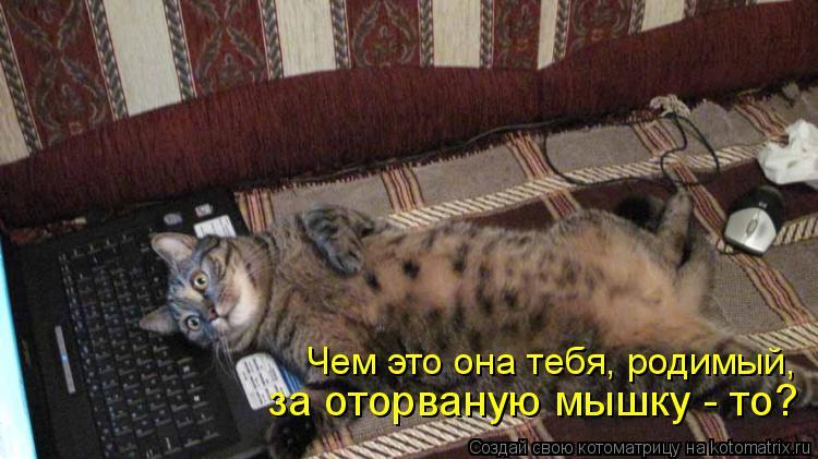 Котоматрица: Чем это она тебя, родимый, за оторваную мышку - то?
