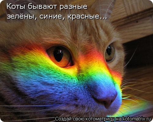 Котоматрица: Коты бывают разные зелёны, синие, красные...