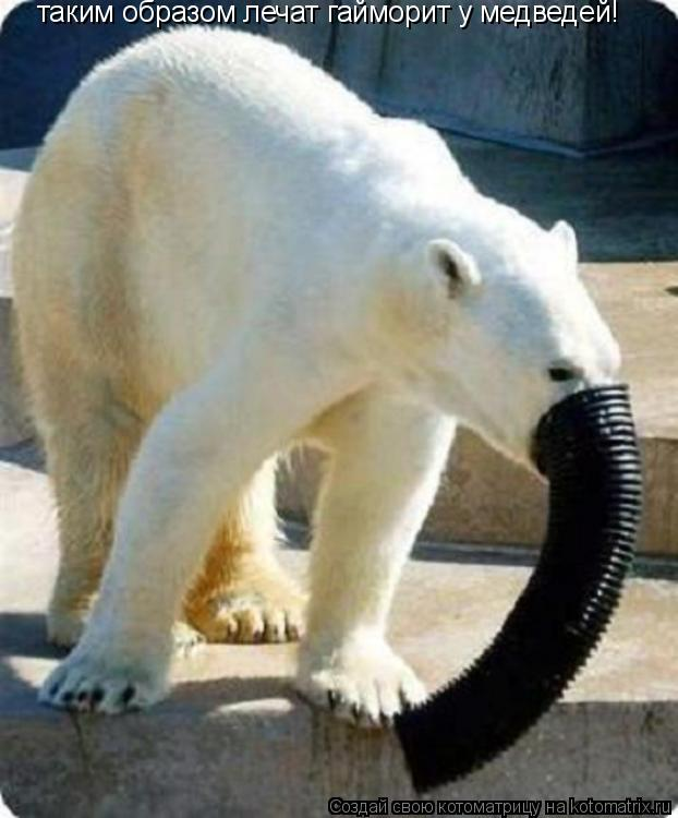 Котоматрица: таким образом лечат гайморит у медведей!