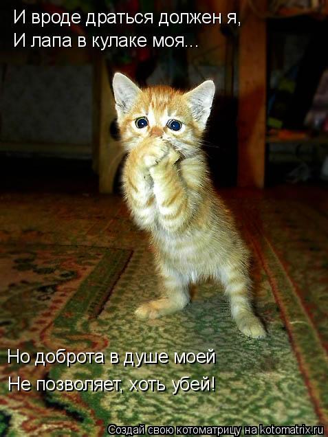 Котоматрица: И вроде драться должен я, И лапа в кулаке моя... Но доброта в душе моей Не позволяет, хоть убей!