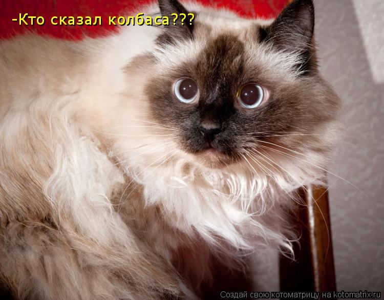 Котоматрица: -Кто сказал колбаса???