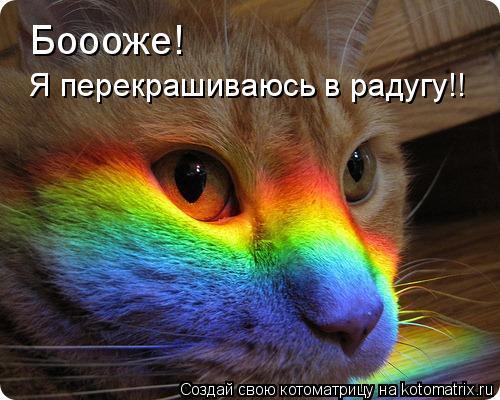 Котоматрица: Боооже! Я перекрашиваюсь в радугу!!