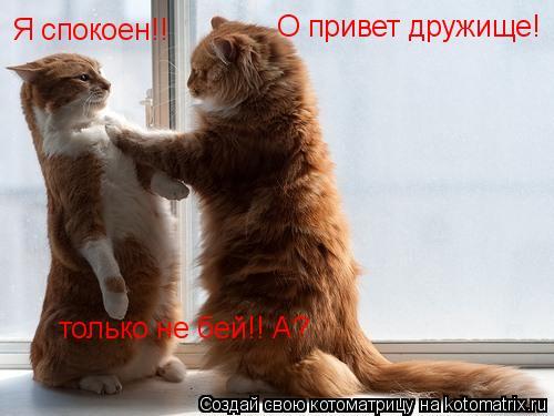 Котоматрица: О привет дружище! Я спокоен!! только не бей!! А?