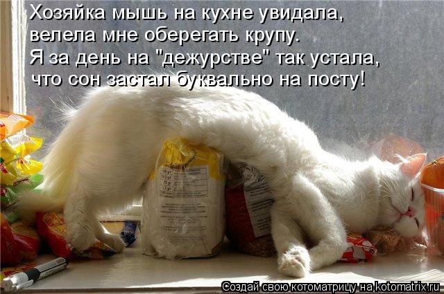 """Котоматрица: Хозяйка мышь на кухне увидала, велела мне оберегать крупу. Я за день на """"дежурстве"""" так устала, что сон застал буквально на посту!"""