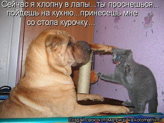 Котоматрица: Сейчас я хлопну в лапы...ты проснешься... пойдешь на кухню...принесешь мне  со стола курочку....