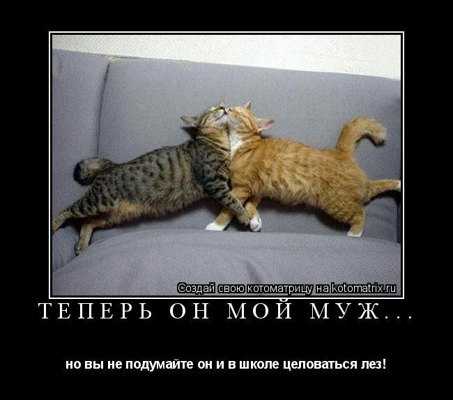 Котоматрица: теперь он мой муж... но вы не подумайте он и в школе целоваться лез!