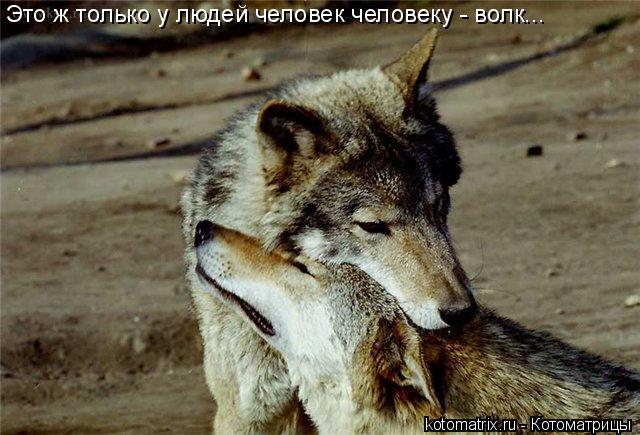 Котоматрица: Это ж только у людей человек человеку - волк...