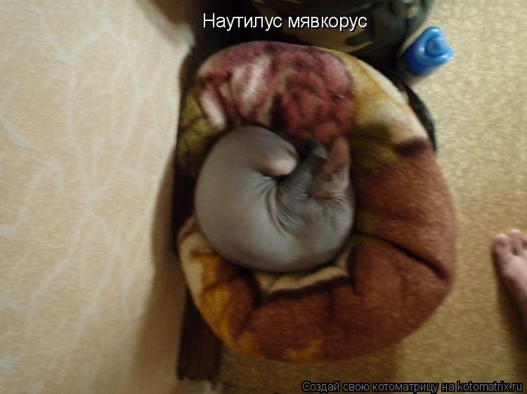 Котоматрица: Наутилус мявкорус