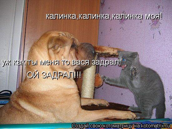 Котоматрица: калинка,калинка,калинка моя! уж как ты меня то вася задрал, ОЙ ЗАДРАЛ!!!