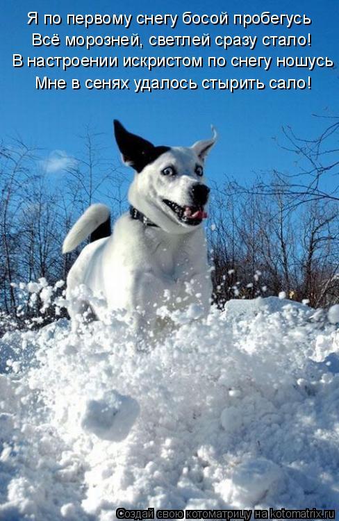 Котоматрица: Я по первому снегу босой пробегусь Всё морозней, светлей сразу стало! В настроении искристом по снегу ношусь Мне в сенях удалось стырить са
