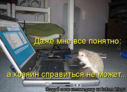 Котоматрица: Даже мне все понятно: а хозяин справиться не может..