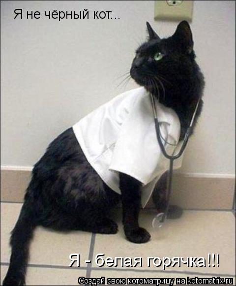 Котоматрица: Я не чёрный кот... Я - белая горячка!!!