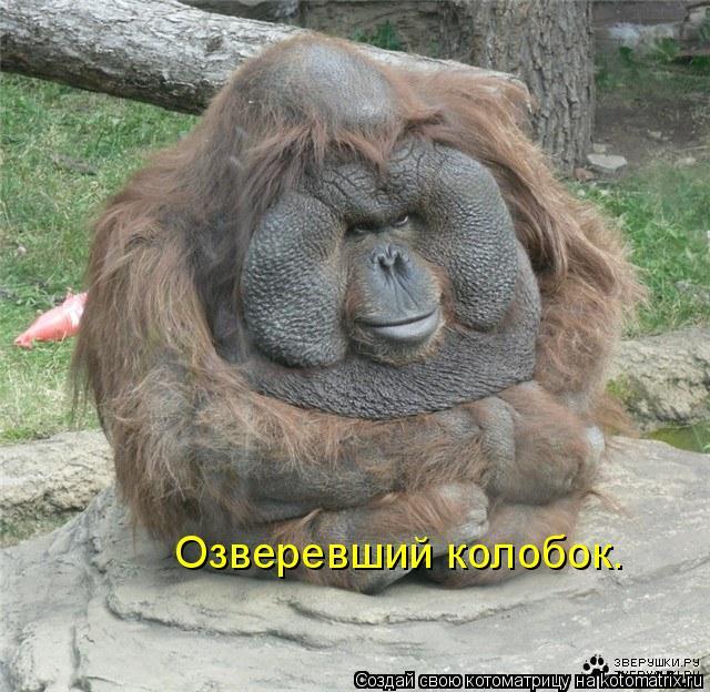 http://kotomatrix.ru/images/lolz/2010/11/19/741892.jpg